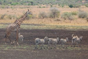 Mkomazi National Park Tanzania Zara Tours 1