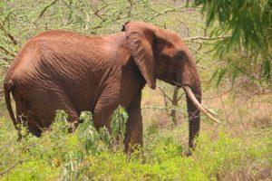 Mkomazi National Park Tanzania Zara Tours 2