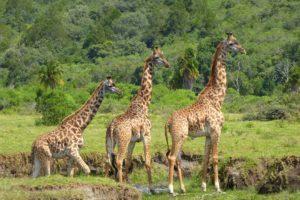 Arusha National Park Safari Tanzania Zara Tours 1