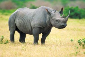 Big Five Safari Tanzania Zara Tours 1