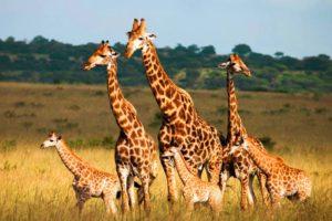 Selous_Game_Rserve_Ruaha_Mikumi_Parks_Safari_Tanzania_Zara_Tours_1