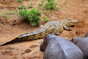 Selous Game Rserve Ruaha Mikumi Parks Safari Tanzania Zara Tours 2
