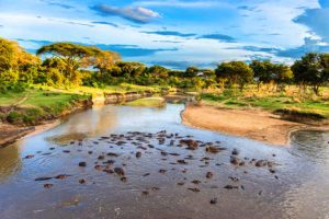 Selous Game Rserve Ruaha Mikumi Parks Safari Tanzania Zara Tours 3