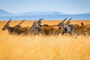 Serengeti Flying Safari Tanzania Zara Tours 3
