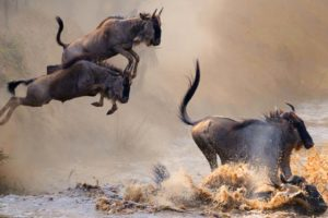 Serengeti Migration Safari Tanzania Zara Tours 2