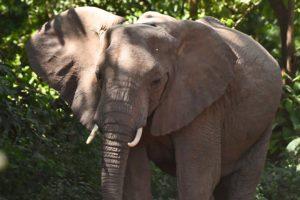 Tanzania_Two_Days_Safari_Tanzania_Zara_Tours_1