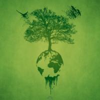 Zara Tree Planting Projects