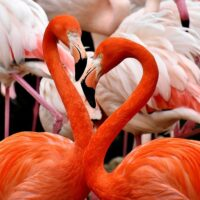 flamingo-3309628_1280