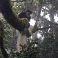 monkey zara tours